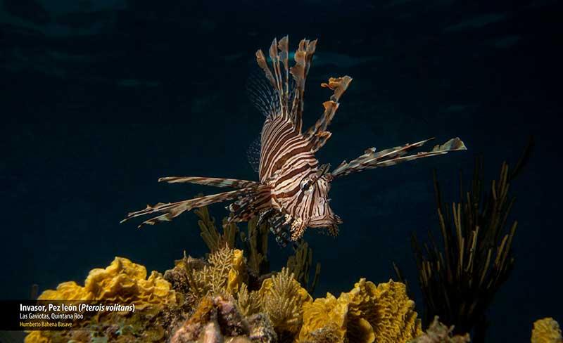 Concurso Nacional de Fotografía de Naturaleza