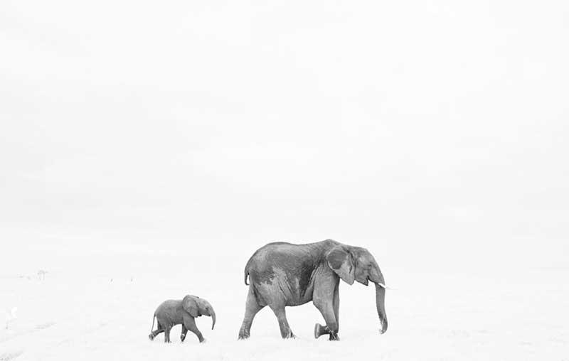 Fotografía de vida salvaje