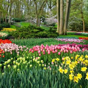 Keukenhof jardines tulipanes