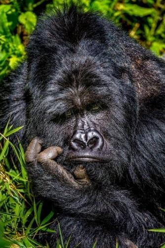 Los premios 'Comedy Wildlife Photography' del 2020 ya tienen finalistas. Estos premios otorgan un reconocimiento a las fotografías más divertidas de la vida silvestre; este año la cantidad de fotografías recibidas fue de más de 7.500 de todas partes del mundo.